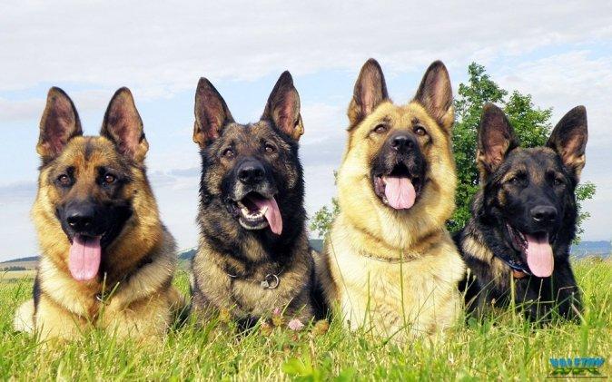 Красивые фотографии собак и