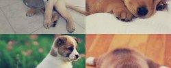 Породы Собак Все