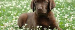 Список Пород Собак с Фото