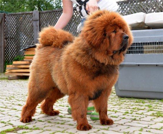 Самые большие щенки